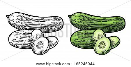 Fresh green cucumbers - whole, half, slices. Isolated on the white background. Vector color and black hand drawn vintage engraving illustration for poster, label, menu, web.