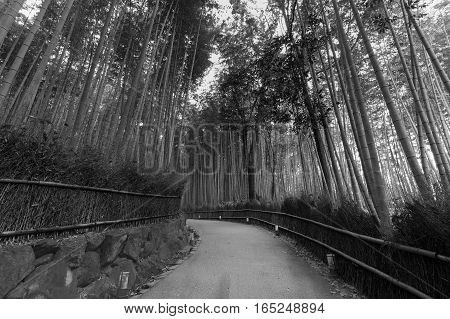 Black and White Bamboo forest with walking passed in Arashiyama at Kyoto Japan