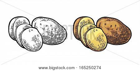 Potato whole and slice. Vector engraving vintage black and color illustration. Isolated on white background.