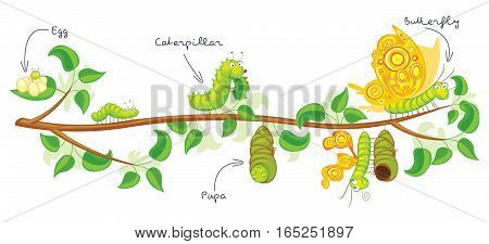 The metamorphosis of the butterfly ( egg, caterpillar, pupa, butterfly ). Life cycle. Funny cartoon character. Vector illustration. Isolated on white background