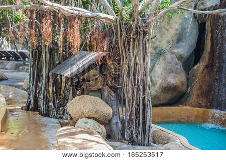 Tropical Tree By The Pool In Vietnam