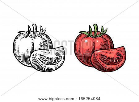 Tomato whole and slice isolated on white background. Vector vintage black and color engraving illustration.