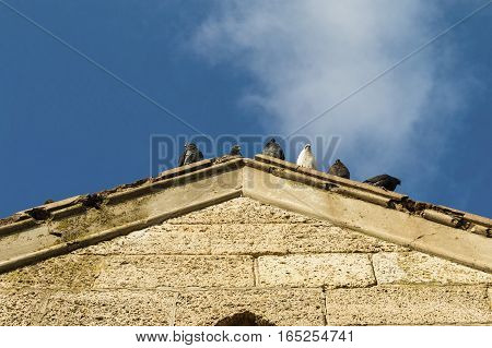 Gray pigeon on the old roof. Stock image.