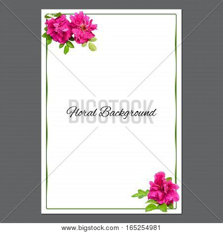 Background Texture Made Of Pink Fresh Terry Rosehips  Flowers  And Place For Text