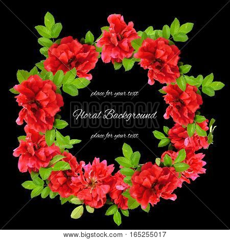 Background Texture Made Of Red Fresh Terry Rosehips  Flowers  And Place For Text