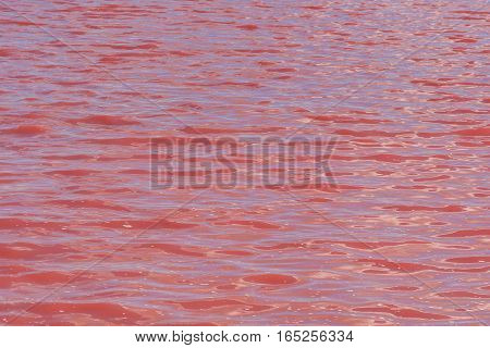 Pink Salt Lake Masazirgol In Azerbaijan