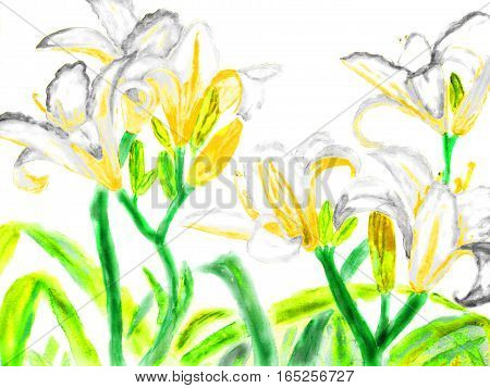 Hand drawn picture watercolour - white lilies with yellow.