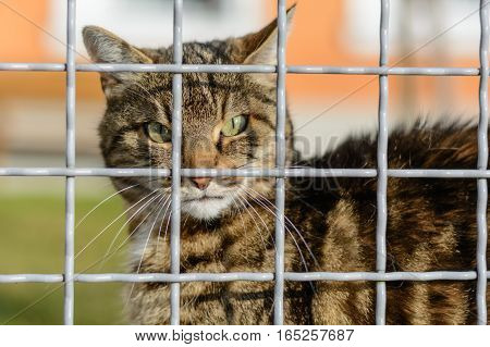 Colorful domestic cat in the wild but still behind bars