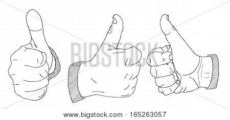 Palms Hand drawn sketched vector illustration. Wrist Doodle Flourish graphic with ornate pattern. Design Isolated on white.
