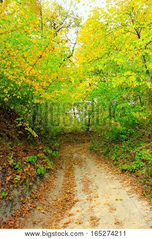 beautiful autumnal colors with forest road and trees bushes