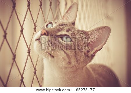 Prisoned Cat Looks Outside