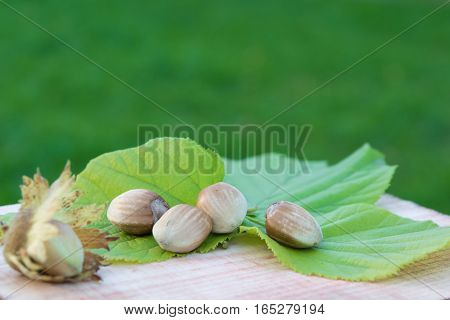 Whole hazelnuts with leaves on the wooden board with green background. Copy space