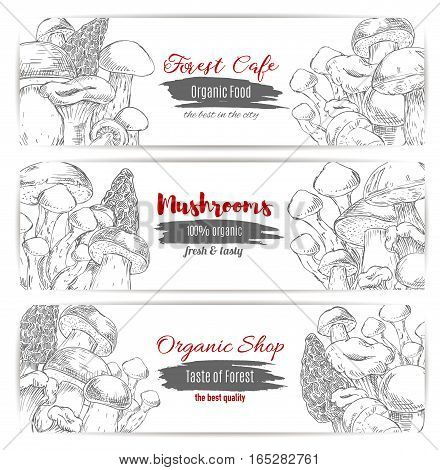 Edible mushrooms banners set of sketch champignon and gourmet morel and truffle mushroom, woolly milkcap porcini and forest cep, chanterelle, russule and milk mushroom or honey agaric. Vector design for organic mushroom shop or vegan cafe