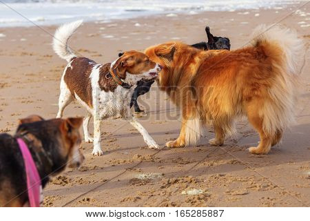 Pack Of Dogs Meeting At The Beach