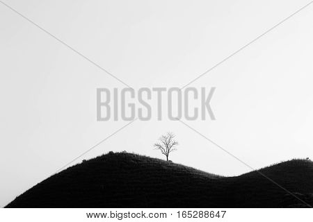 Lone Tree without leaves on a hill. Black and white
