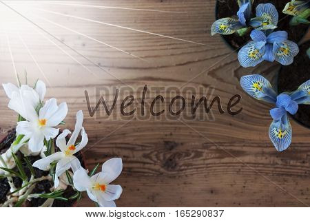 Wooden Background With English Text Welcome. Sunny Spring Flowers Like Grape Hyacinth And Crocus. Aged Or Vintage Style