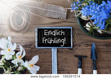 Sign With German Text Endlich Fruehling Means Hello Spring. Sunny Spring Flowers Like Grape Hyacinth And Crocus. Gardening Tools Like Rake And Shovel. Hemp Fabric Ribbon. Aged Wooden Background