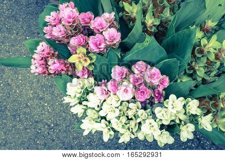 Many types of flowers for sale along the way.