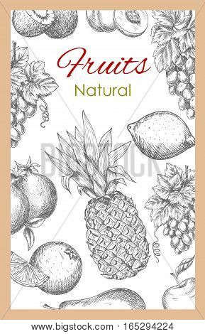 Fruits poster of vector sketch tropical pineapple and exotic kiwi, orange or tangerine and citrus lemon or lime, garden white and red grape, pomegranate, peach or apricot and apple. Vector farm ripe juicy fruits harvest