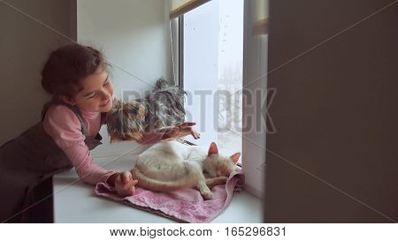 girl teen and pets cat and dog looking out the window, pet cat sleeps