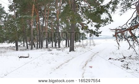 trees forest christmas nature tree, snow frost cold landscape winter
