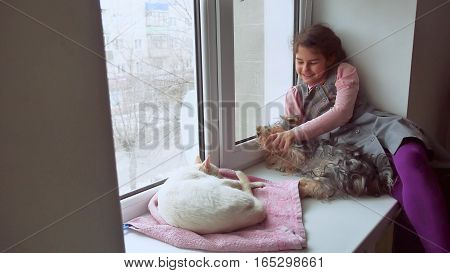 girl teen and pets cat and pet dog looking out the window, cat sleeps