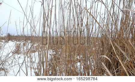 dry grass marsh winter reed beautiful landscape nature