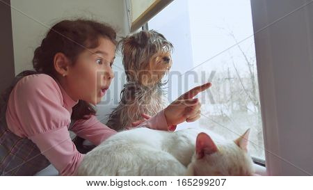 girl teen and pets cat and dog looking out pet window, the cat sleeps