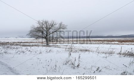 dry grass marsh winter reed beautiful cold landscape nature