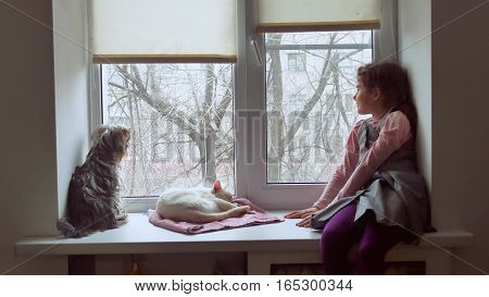 girl teen and pets cat and pet dog looking out window, cat sleeps