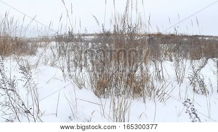 dry grass field winter nature snow winter landscape