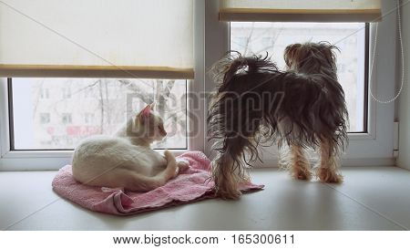 cat and a funny dog Yorkshire Terrier sitting on the sill of window pet