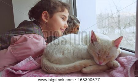 girl teen and pets cat and dog looking out the window, cat sleeps