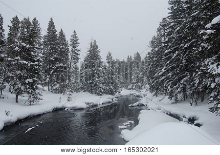Snowy wooded forest and river in Yellowstone National Park