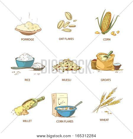 Cartoon ripe ears of cereals, countryside plants vector set. Natural grain heap of cereal, illustration of nutrient cereals poster