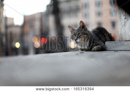 Sad street cat lying on the ground
