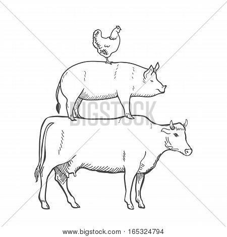 Chicken Pork Cow Farm Animals Vector illustration