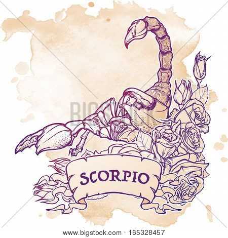 Zodiac sign Scorpio. Detailed realistic scorpio in a decorative frame of roses. Sketch isolated on white background. Concept art for tattoo design, horoscope, coloring book for adults page.