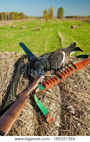 bird hunting in the summer, gun and bullets