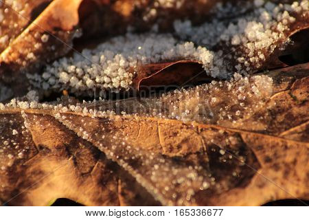 This is a detail of frozen leaf.