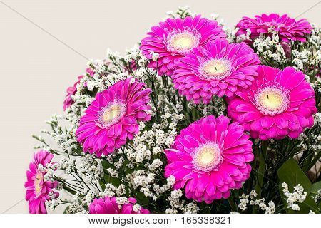 Large bouquet of pink gerberas in a gift on Valentines Day March 8 Mothers Day. Selective focus