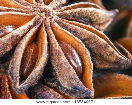 Star Anise Extreme Close Up