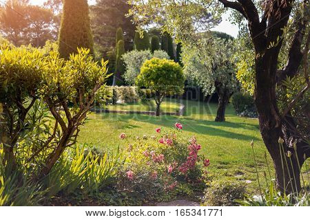 Green lawn and trees. Little pink flowers. Beauty of summer nature.