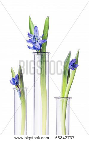 Flowers And Plants In Test Tubes Isolated On White.