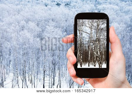 Photo Of Birch Trees In Frozen Forest In Winter