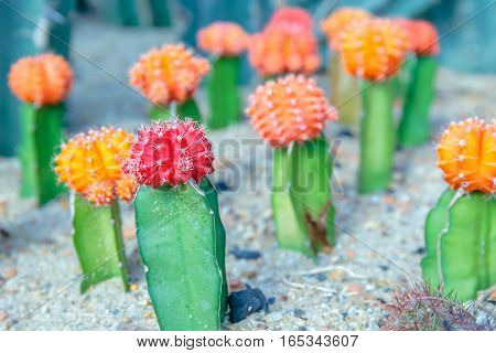 small colorful cactus on the sand floor