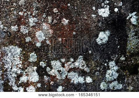A wall with white mold different sizes