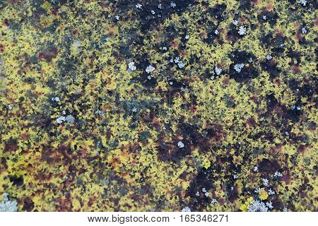 A green moss surface and a mold