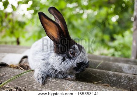 Cute rabbit funny face, fluffy gray black bunny on stone background. soft focus, shallow depth field