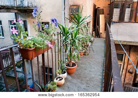 Outdoor pots with plants on the terrace of a house